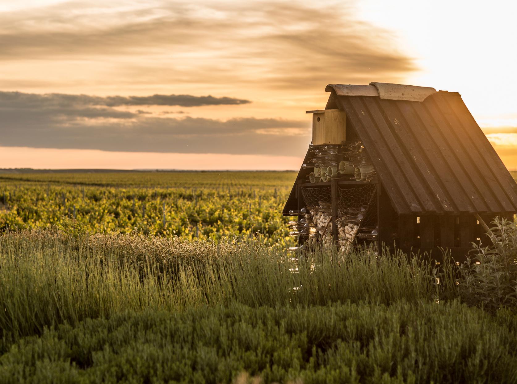 Más allá de la viticultura ecológica
